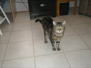 Stewie the Cat, who suffered from PTSD after Hurricane Katrina and ran away just before Christmas of 2011.